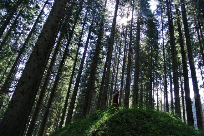 alberi e violini